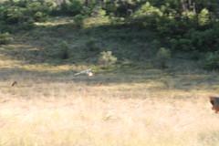"Pendakian Sakuntala Gunung Argopuro Juni 2014 • <a style=""font-size:0.8em;"" href=""http://www.flickr.com/photos/24767572@N00/27127957066/"" target=""_blank"">View on Flickr</a>"