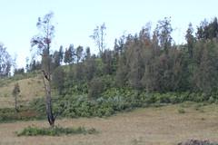 "Pendakian Sakuntala Gunung Argopuro Juni 2014 • <a style=""font-size:0.8em;"" href=""http://www.flickr.com/photos/24767572@N00/27066483062/"" target=""_blank"">View on Flickr</a>"