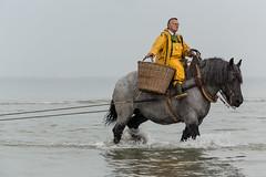 Garnaalvisser te paard - Mens en natuur