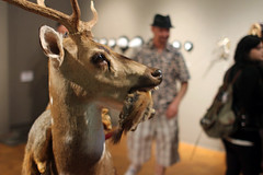 3rd Biennial Taxidermy show01