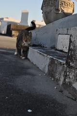 StLouis 3- kitty