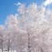 Neve no Parque Natural do Alvão-10
