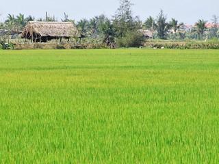 hoi an - vietnam 48