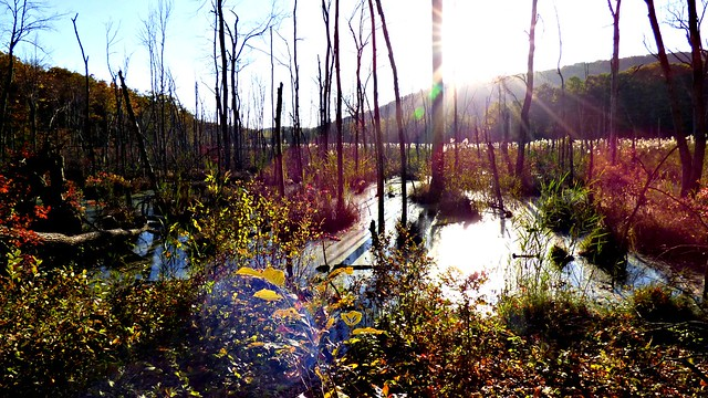 Swamp in late afternoon light