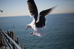 Seagul Landing