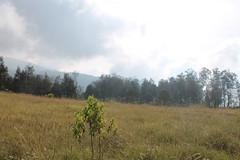 "Pendakian Sakuntala Gunung Argopuro Juni 2014 • <a style=""font-size:0.8em;"" href=""http://www.flickr.com/photos/24767572@N00/26887362320/"" target=""_blank"">View on Flickr</a>"