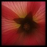 Flower,Pop,culpa,Travemünde