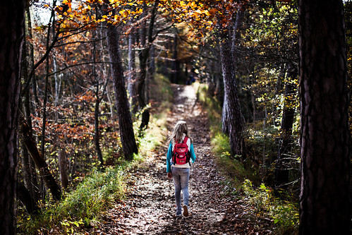 autumn trees childhood forest walking kid hiking path... (Photo: Chrisnaton on Flickr)