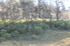 "Pendakian Sakuntala Gunung Argopuro Juni 2014 • <a style=""font-size:0.8em;"" href=""http://www.flickr.com/photos/24767572@N00/27127946986/"" target=""_blank"">View on Flickr</a>"