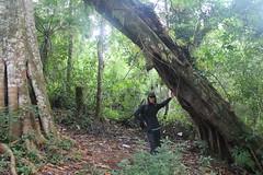"Pendakian Sakuntala Gunung Argopuro Juni 2014 • <a style=""font-size:0.8em;"" href=""http://www.flickr.com/photos/24767572@N00/26887722900/"" target=""_blank"">View on Flickr</a>"