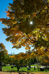 A (star)burst of autumn