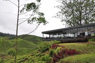 cameron highlands- malaisie 29