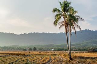 langkawi - malaisie 82