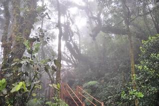 cameron highlands- malaisie 19