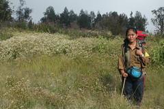 "Pendakian Sakuntala Gunung Argopuro Juni 2014 • <a style=""font-size:0.8em;"" href=""http://www.flickr.com/photos/24767572@N00/26557404793/"" target=""_blank"">View on Flickr</a>"