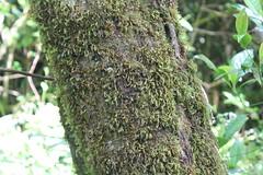 "Pendakian Sakuntala Gunung Argopuro Juni 2014 • <a style=""font-size:0.8em;"" href=""http://www.flickr.com/photos/24767572@N00/26887611530/"" target=""_blank"">View on Flickr</a>"