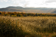 "Cornfields • <a style=""font-size:0.8em;"" href=""http://www.flickr.com/photos/19514857@N00/15157127744/"" target=""_blank"">View on Flickr</a>"