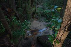 Turtle Falls