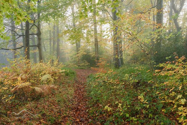 Teign Leaves