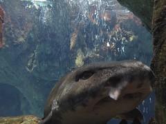 Roussette Aquarium Lisbonne