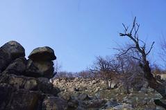 Stejar si granit