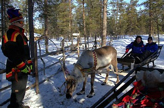 Insane reindeer pretending to be normal