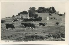 Rodborough Fort 48