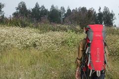 "Pendakian Sakuntala Gunung Argopuro Juni 2014 • <a style=""font-size:0.8em;"" href=""http://www.flickr.com/photos/24767572@N00/27066663072/"" target=""_blank"">View on Flickr</a>"