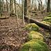 Skogsråets stig