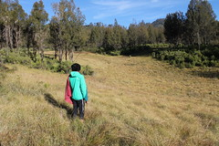 "Pendakian Sakuntala Gunung Argopuro Juni 2014 • <a style=""font-size:0.8em;"" href=""http://www.flickr.com/photos/24767572@N00/27161256075/"" target=""_blank"">View on Flickr</a>"