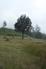 "Pendakian Sakuntala Gunung Argopuro Juni 2014 • <a style=""font-size:0.8em;"" href=""http://www.flickr.com/photos/24767572@N00/27161761465/"" target=""_blank"">View on Flickr</a>"