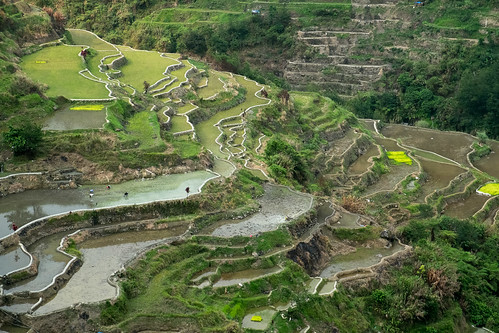 Endless terraces. Banaue