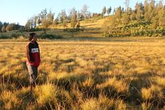 "Pendakian Sakuntala Gunung Argopuro Juni 2014 • <a style=""font-size:0.8em;"" href=""http://www.flickr.com/photos/24767572@N00/26887155130/"" target=""_blank"">View on Flickr</a>"