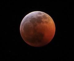 Blood Moon lunar eclipse 1/2019