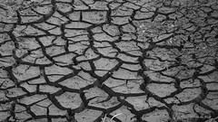 Long dry Summer_c