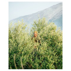 Day 1073 - Savannah and I walked uphill most of the day, passing lots of olive groves with men like this one trimming the branches. The towns in the mountains here are just mind-boggling. They seem to be natural growths the way they climb up the steep hil