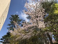 190411_Spring 3
