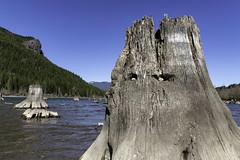 Sentinels of Rattlesnake Lake