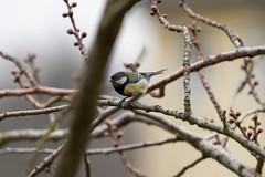 Vogel Part II (bewölkt)