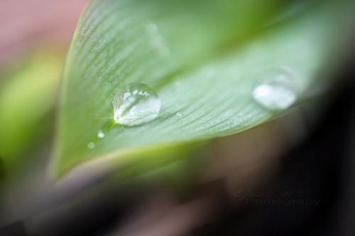 Garden Spring Drops