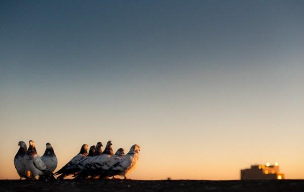 Jesus's Pigeons: Tremont Bronx