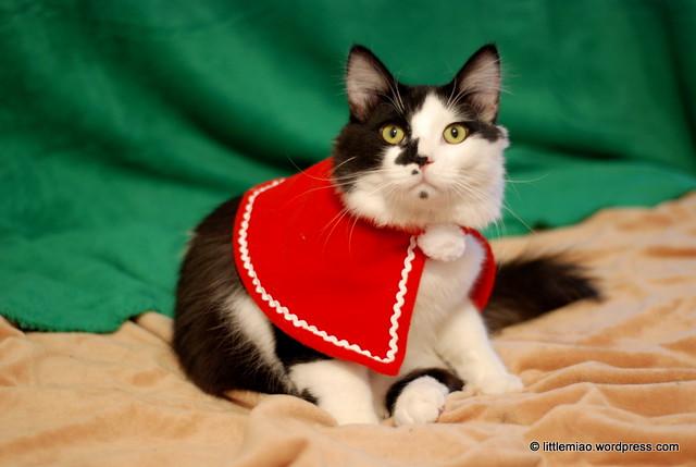 redcloaksprocket 1-2-2012 4-24-16 PM