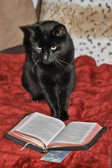 Mischief reads the Bible