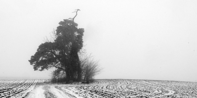 Winter Fog and Tree