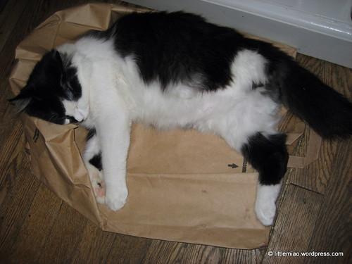 paper bag nap