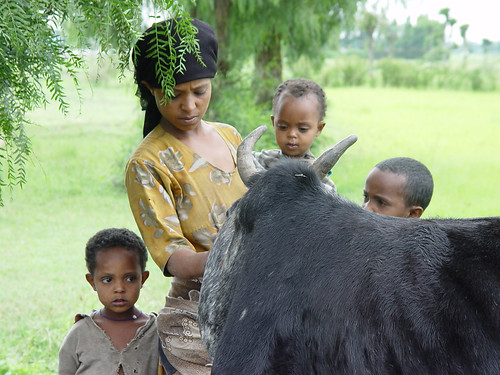 Ethiopian livestock-keeping family