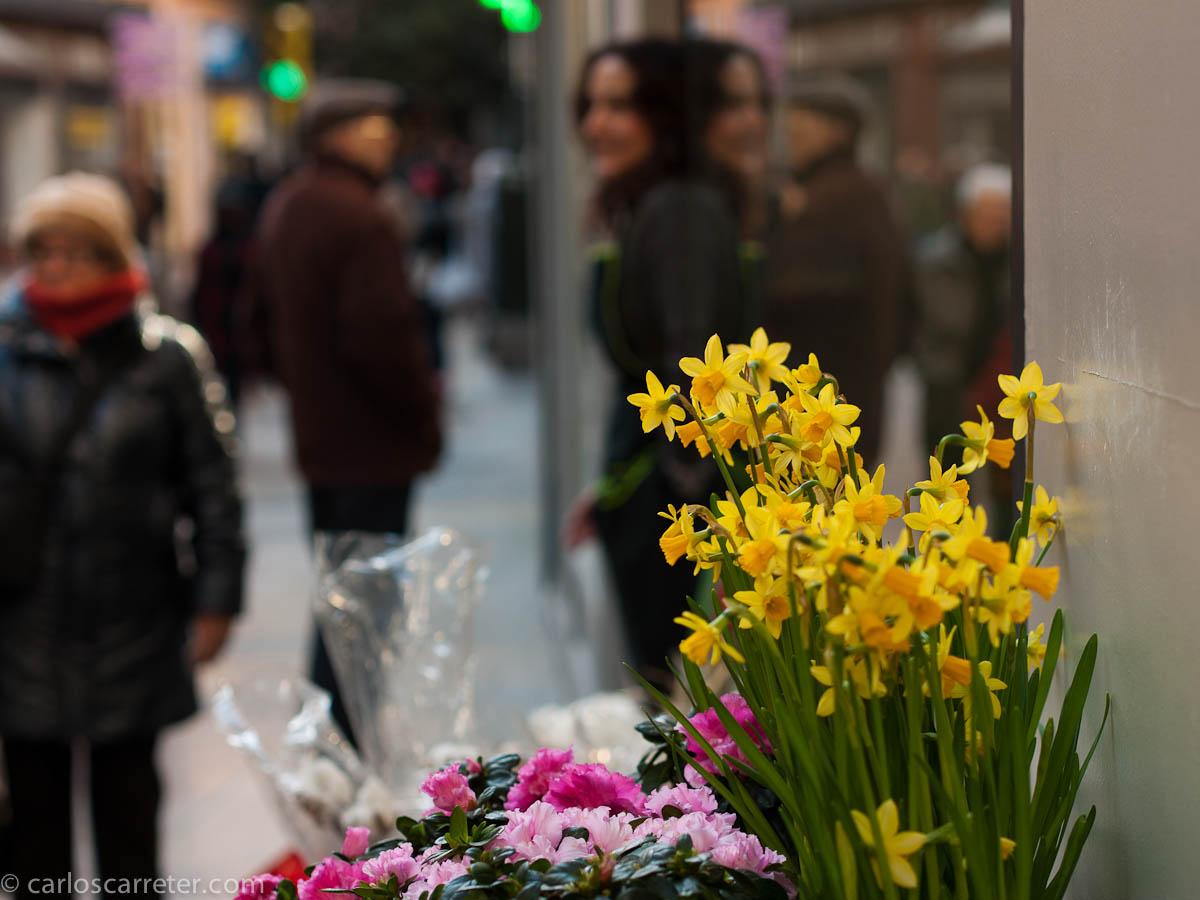 Las flores y la florista