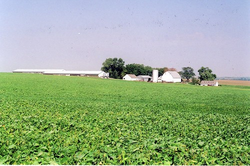 Soybean Field, Perkins, IA 2005