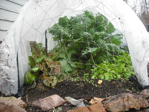 Fourth Season Hoop House