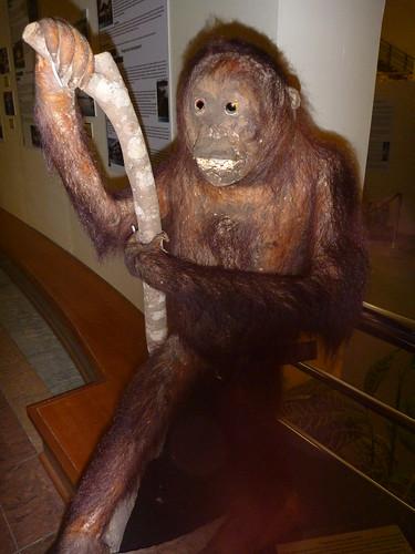 Stuffed orang-utan